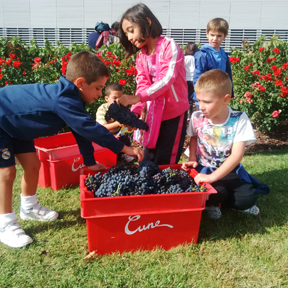 More than 100 children learn to harvest in Viña Real
